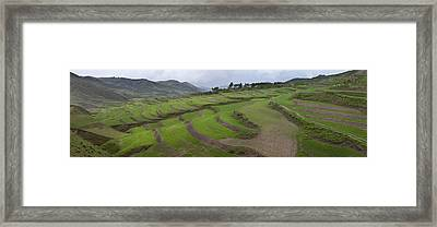 Barley Crop Grown On Terraced Hillsides Framed Print by Phil Borges