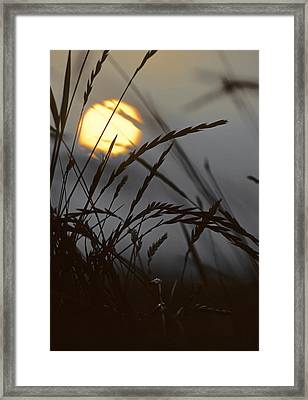 Barley Sunrise Framed Print by Nigel Forster