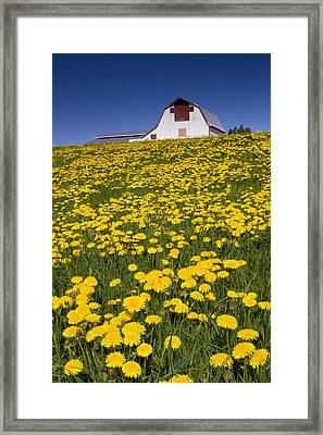 Barn And Dandelions, Brookfield, Prince Framed Print by John Sylvester