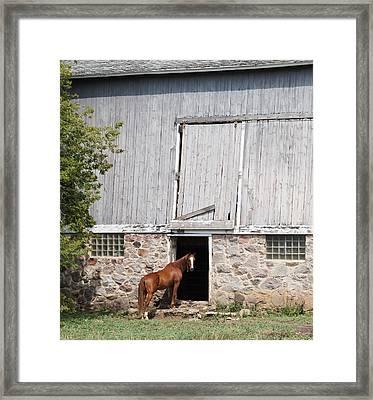 Barn And Horse Framed Print by Kristine Bogdanovich