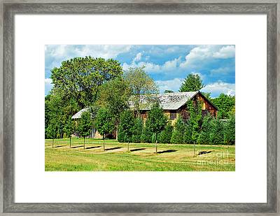 Barn And Trees Framed Print by HD Connelly