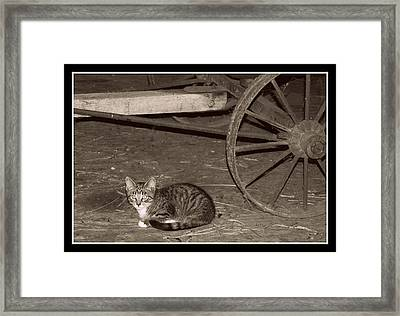 Barn Cat II Framed Print