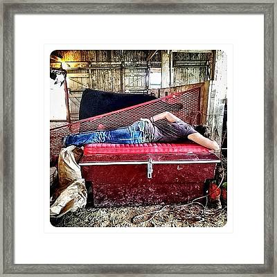 Barn Nap Framed Print