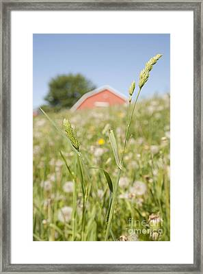 Barn On A Grass Slope Framed Print by Shannon Fagan