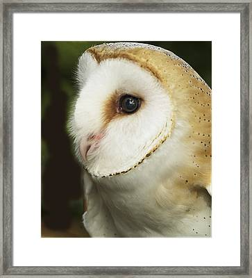 Barn Owl Close-up Framed Print by Barbara Middleton
