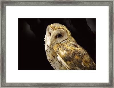 Barn Owl In A Dark Tree Framed Print