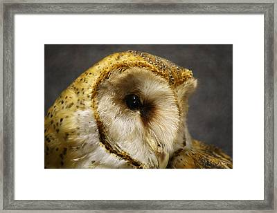 Barn Owl Portrait Framed Print