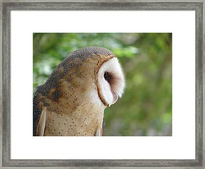 Barn Owl Framed Print by Randy J Heath
