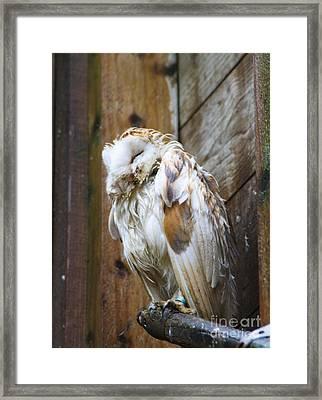Barn Owl Soggy Framed Print by Jo
