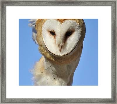 Barn Owl Up Close Framed Print by Paulette Thomas