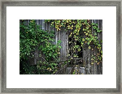 Barn Window Vine Framed Print