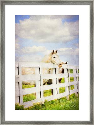 Barn Yard Dreamer Framed Print by Darren Fisher