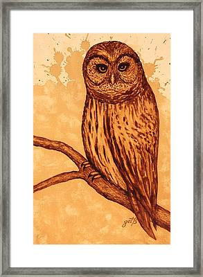 Barred Owl Coffee Painting Framed Print by Georgeta  Blanaru