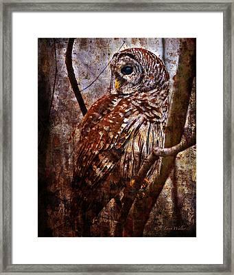 Barred Owl In Hiding Framed Print by J Larry Walker