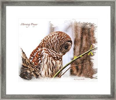 Barred Owl In Morning Prayer Framed Print by J Larry Walker