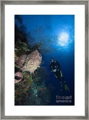 Barrel Sponge And Diver, Belize Framed Print by Todd Winner