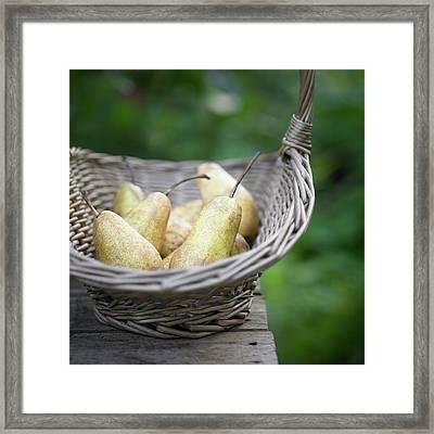 Basket Of Freshly Picked Pears. Framed Print by Dougal Waters