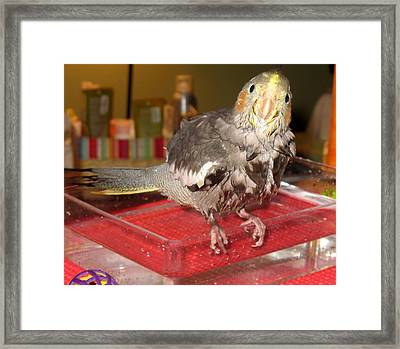 Bath Night For Birdies Framed Print by Kimberly Mackowski