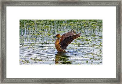 Bath Time Framed Print by Wild Expressions Photography