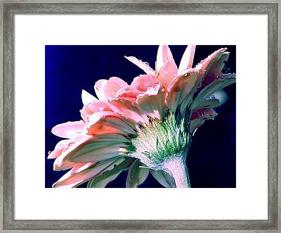 Bathing In Moonlight Framed Print