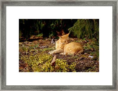 Bathing In The Garden Framed Print