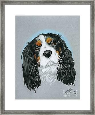 Baxter Framed Print by Marshall Robinson