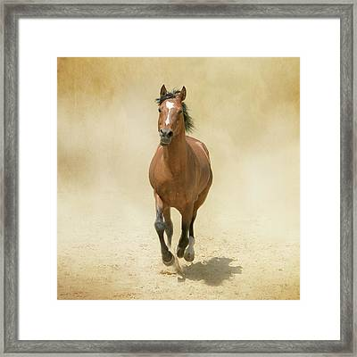 Bay Horse Galloping In Dust Framed Print by Christiana Stawski