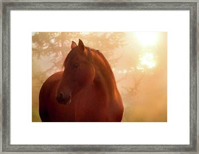 Bay Horse In Fog At Sunrise Framed Print by Anne Louise MacDonald of Hug a Horse Farm