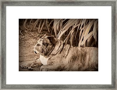Framed Print featuring the photograph Baydie by Jeanette C Landstrom