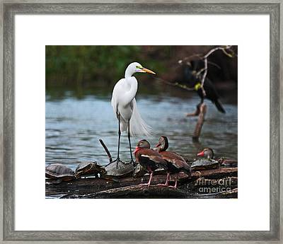 Framed Print featuring the photograph Bayou Friends by Luana K Perez