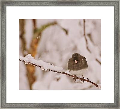 Framed Print featuring the photograph Be Careful What You Wish For by John Harding