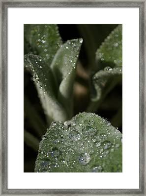 Be Dazzle Framed Print