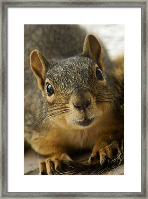 Be Friends Framed Print