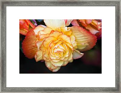 Be Gentle Framed Print by Steve Harrington