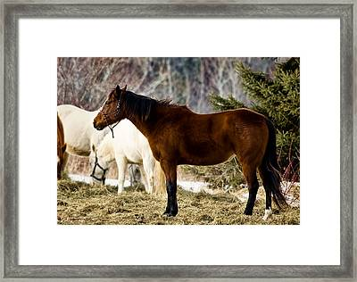 Be My Friend Framed Print by Gary Smith