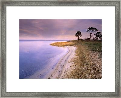 Beach Along Saint Josephs Bay Florida Framed Print by Tim Fitzharris