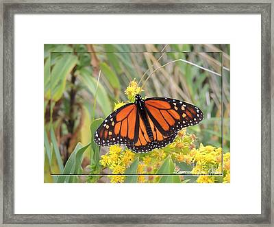 Beach Beauty Framed Print by Laurence Oliver