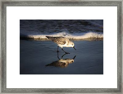 Beach Bird Framed Print by Paulette Thomas