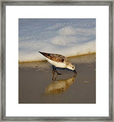 Beach Bird Framed Print