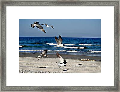 Beach Birds In Play Framed Print by Nicole Hutchison