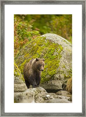 Beach Combing Framed Print by Tim Grams