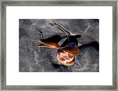 Beach Composition Framed Print by Danuta Bennett
