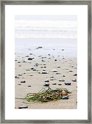 Beach Detail On Pacific Ocean Coast Of Canada Framed Print by Elena Elisseeva