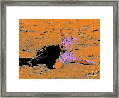 Beach Dog 8 Framed Print by Nina Kaye