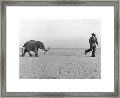 Beach Elephant Framed Print by John Drysdale