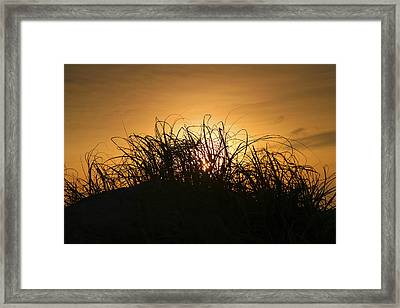 Beach Grass At Sunrise Framed Print by Steven Ainsworth