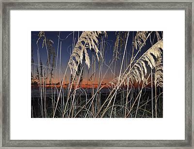 Beach Grass Framed Print by Susan McNamara
