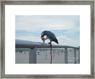Beach It Parot Framed Print by Laurence Oliver