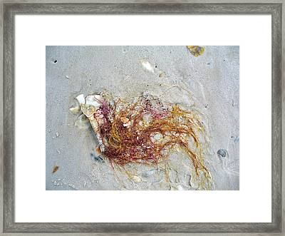 Beach Life Framed Print by Mary Sullivan