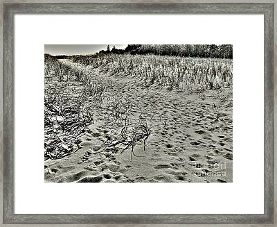Beach Path Framed Print by Lin Haring